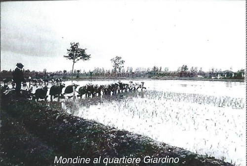 1 - Cesano Boscone - Mondine al quartiere Giardino