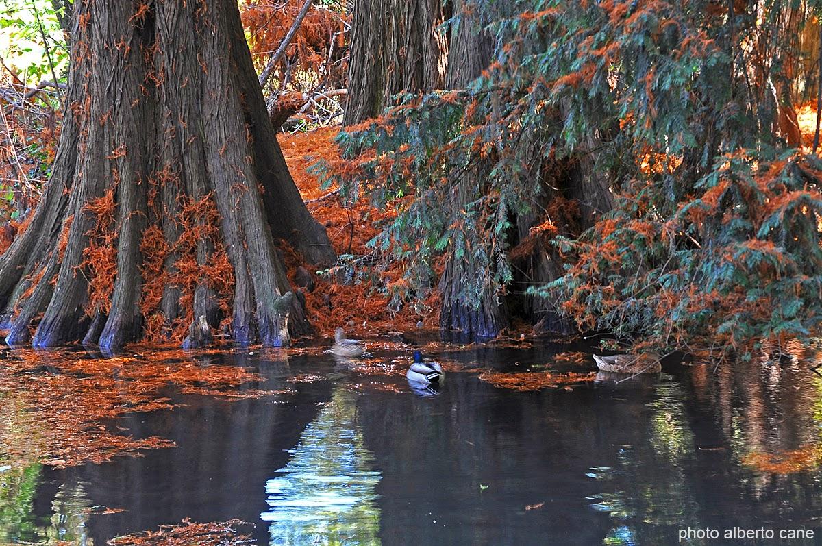 Risultati immagini per Milano, parco sempione e lo spettacolo dell'autunno