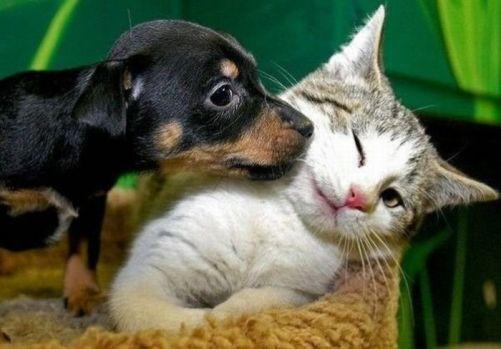 mangime-per-cani-e-gatti-ritirato