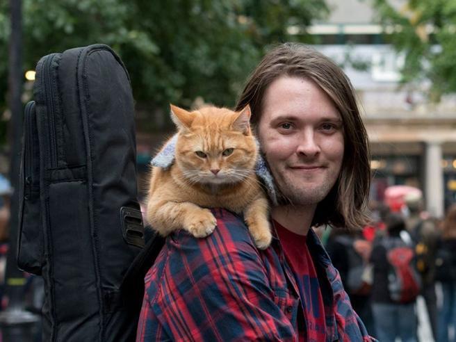 È morto il gatto Bob, diventato famoso per un film e unlibro