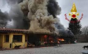 Le fiamme distruggono un canile nel Comasco: 60 cani portati insalvo